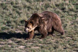 Bild eines anderen Bären